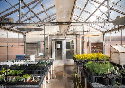 NAU Greenhouse