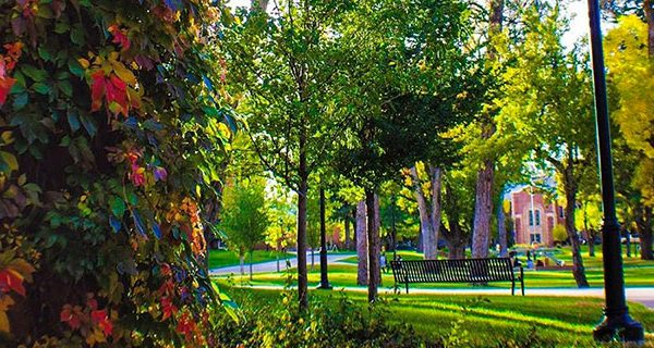 Fall colors on the NAU campus.