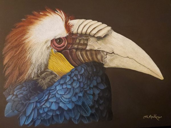 Colored pencil drawing of a toucan by J.R. MacKenzie.