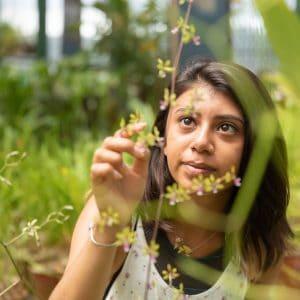 Student examining a plant