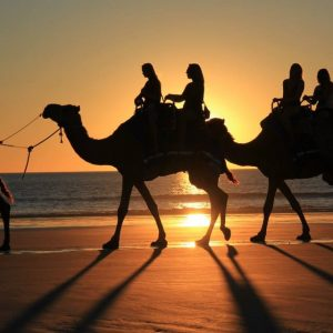 People on camels walking on the beach at sunset.