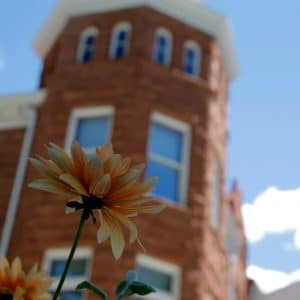 Flower outside of Old Main on a sunny day in Flagstaff