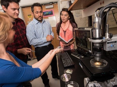 nau graduate college students work with professor on a project in the electron lab
