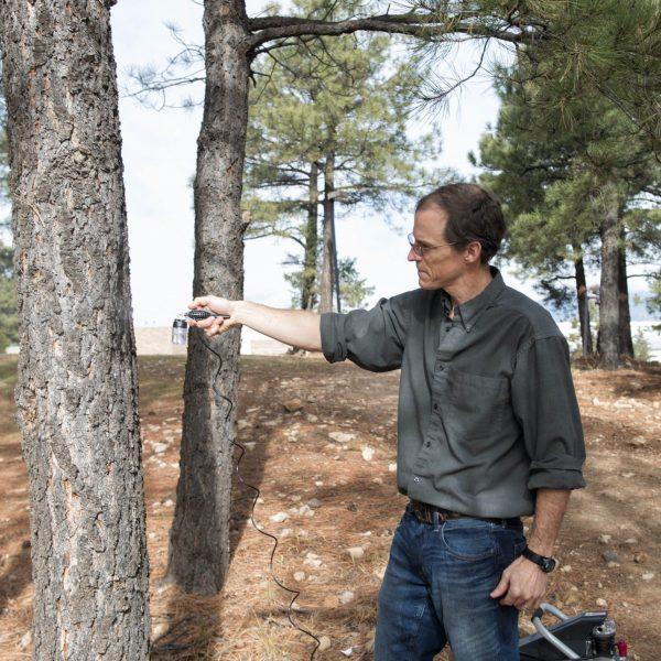 professor examines tree bark in forest