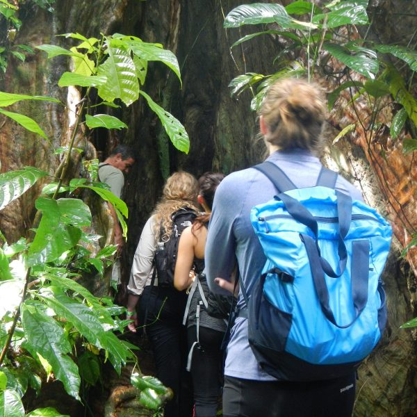 group of students backpack around large tree trunk