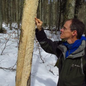 older man examines tree bark in a snowy forest