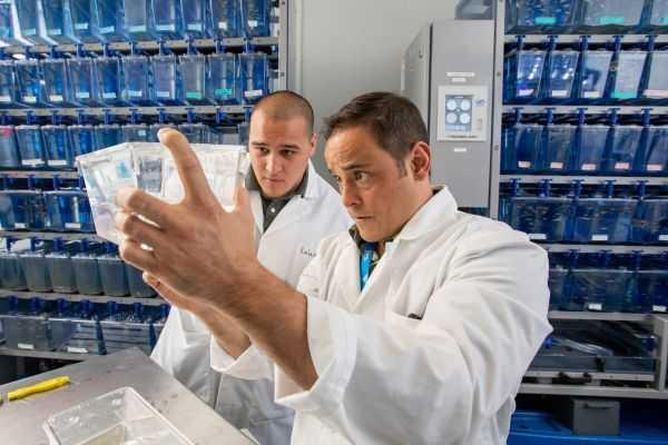 Matt Salanga and Phillip Kalaniopio working in lab