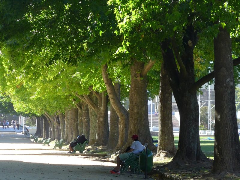 A walkway at a park with many trees and a man sitting on a bench