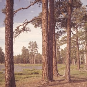 Spring in the Forest on the Mogollon Plateau, Arizona. Just back from the breakoff of the Mogollon Rim, the rich brown of tall Ponderosa pine edging a meadow and pond suggest a coolness of the season. Sitgreaves Nat'l Forest. [Caption by Josef Muench]