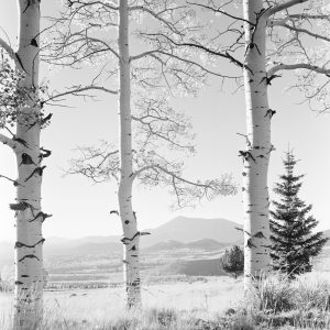 San Francisco Peaks- Fall. Autumn- San Francisco Peaks- View thru 3 Aspens from Snowbowl. [Caption by Josef Muench]
