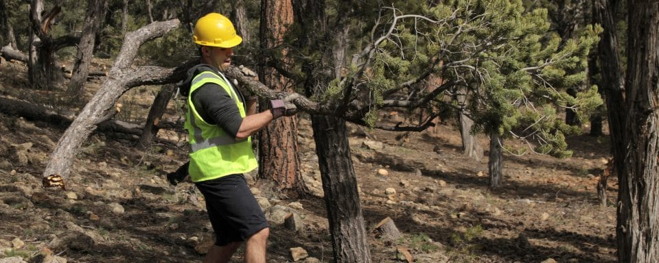 man wearing a hard hat and yellow vest carries large tree branch through a forest