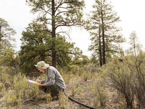 nau cefns student doing research in a field near sunset crater