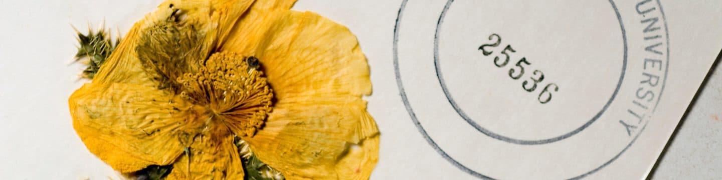 Deaver Herbarium, Northern Arizona University