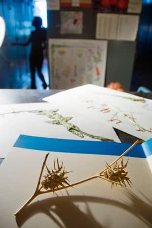 spiky plants on paper in Deaver Herbarium
