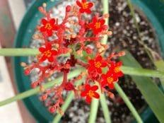 orange flowers in a teaching greenhouse at nau