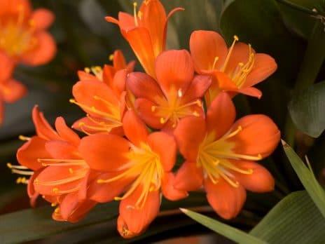 orange flowers near nau biological sciences building in garden