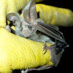 Pathogen Detection and Transmission in Wildlife Reservoirs