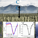 Understanding the Causes and Implications of Enhanced Seasonal CO2 Exchange in Boreal and Arctic Ecosystems
