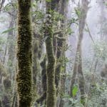 Understanding Tropical Forest Productivity
