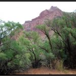 Detecting an Invasive Species in the Grand Canyon