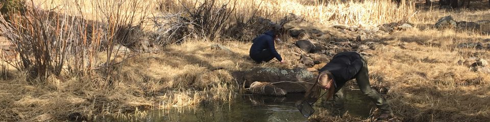 nau professor and students study water ecology