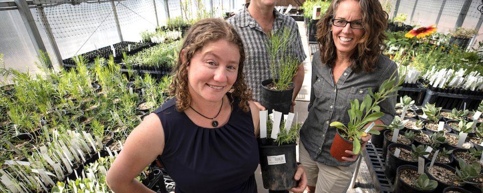 Kevin Grady, Clare Aslan, Karen Haubensak in NAU greenhouse