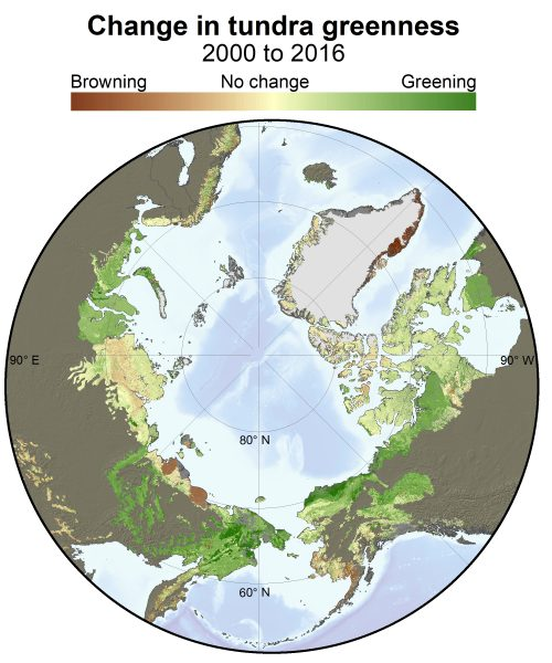 Berner Arctic Greening illustration