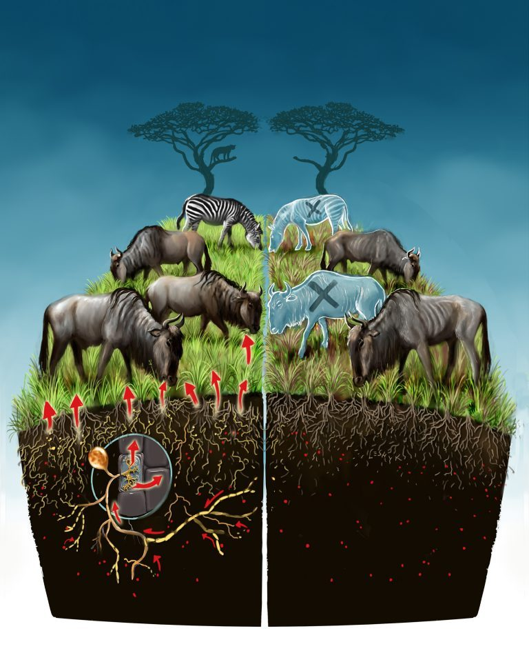 Artist's depiction of the Serengeti food web