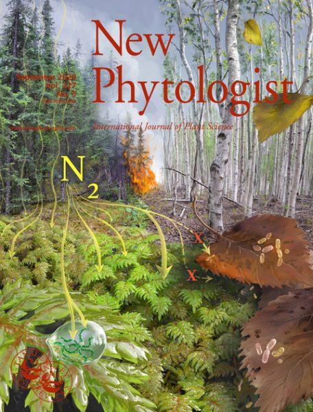 Victor Leshyk illustration for New Phytologist