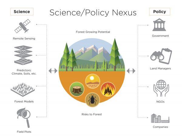 Illustration of Nexus