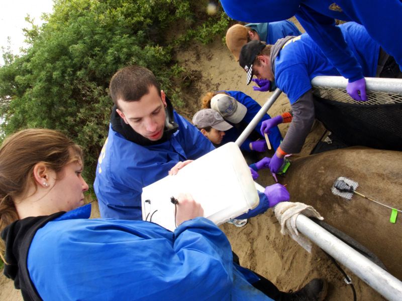 Students working in the field on marine species research